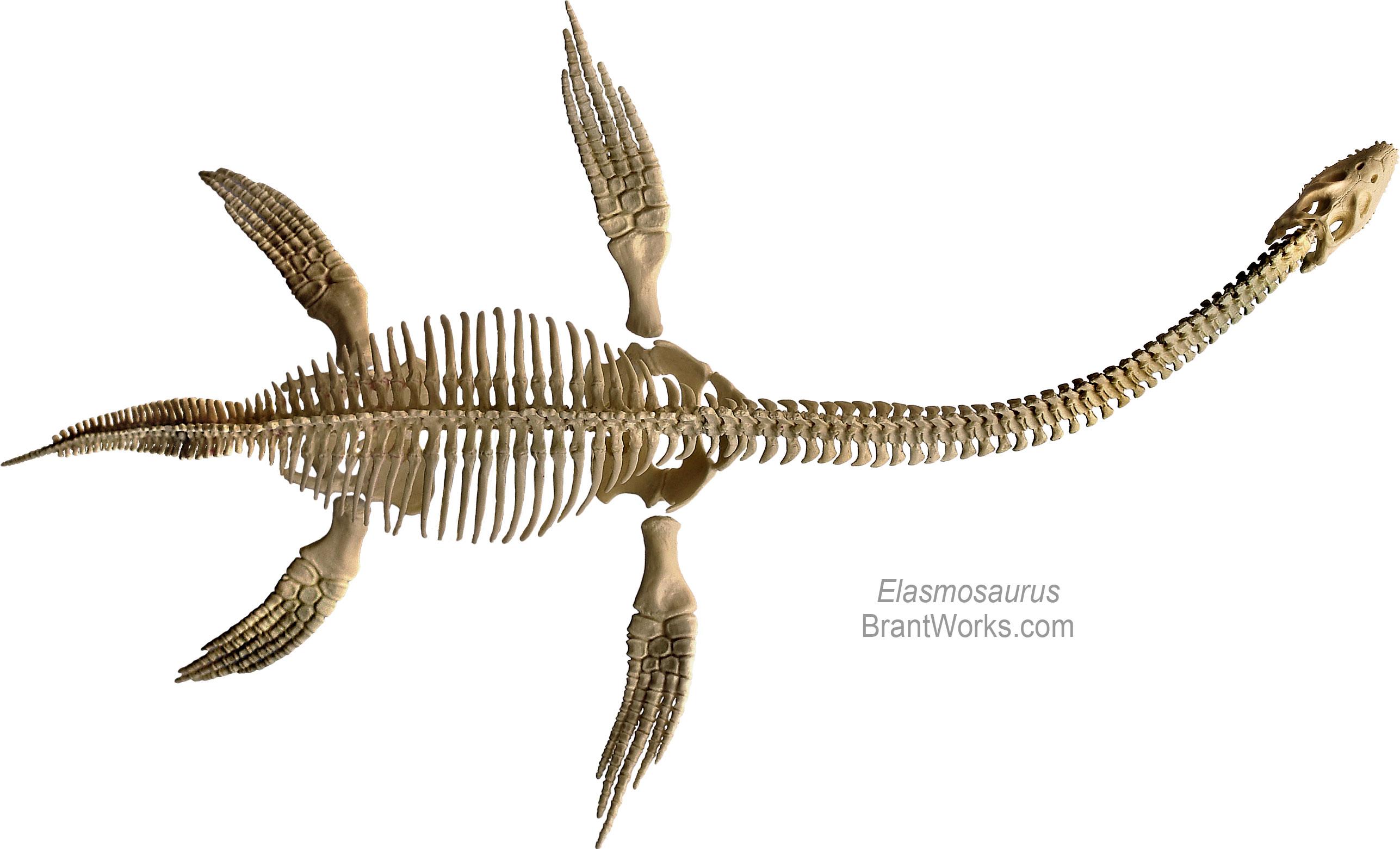 BrantWorks: Other Skeleton Models