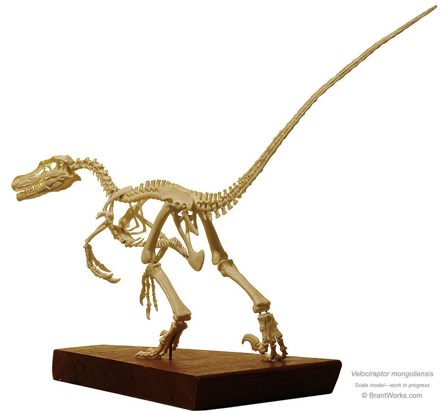 BrantWorks: Velociraptor Skeleton