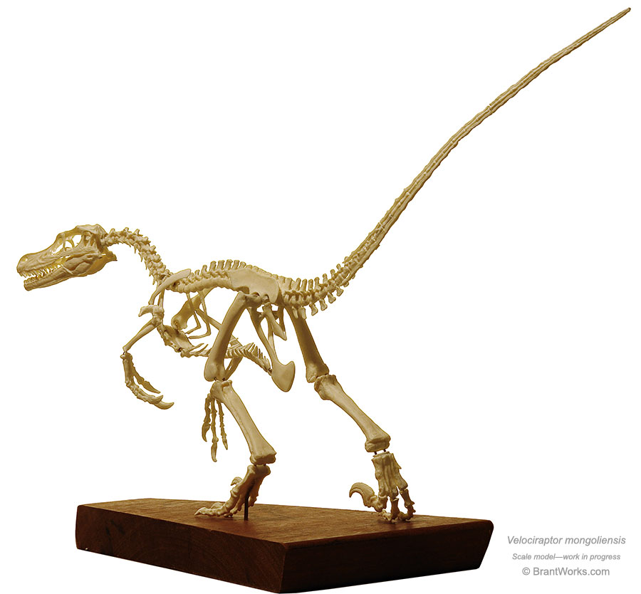 BrantWorks: Velociraptor Skeleton  BrantWorks: Vel...