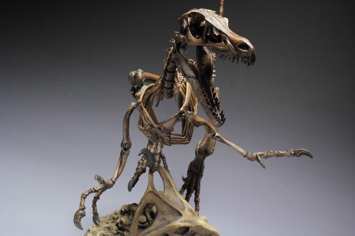 Velociraptor Skeleton 4 printing |Velociraptor Skull Front